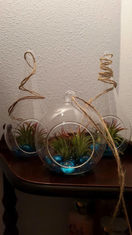 Terrario Per Piante Grasse terrario in vetro da appendere o da tavolo