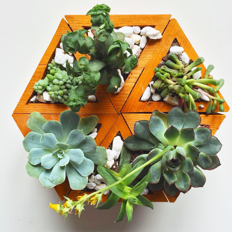Mini giardino verticale di piante grasse keblog shop - Piante per giardino verticale ...