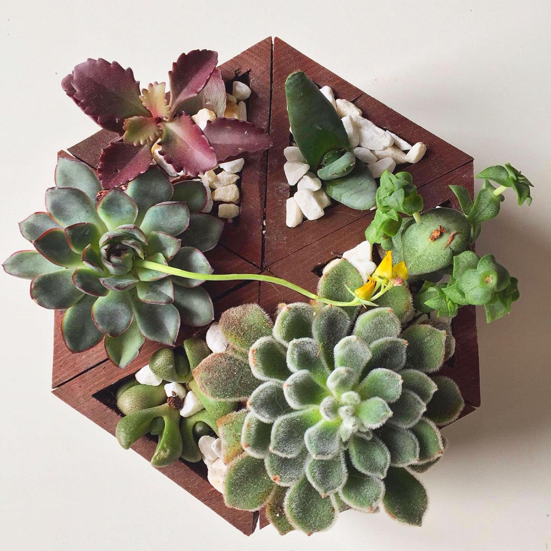 Giardini Verticali Fai Da Te negozio di keblog mini giardino verticale di piante grasse