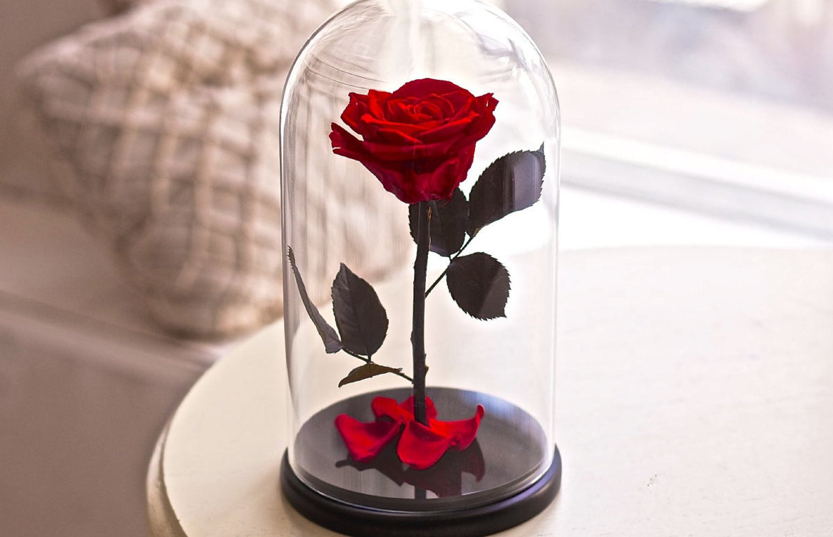 Pretty beauty and the beast flower vase photos wedding and flowers vere rose che durano fino a 5 anni keblog shop izmirmasajfo Choice Image